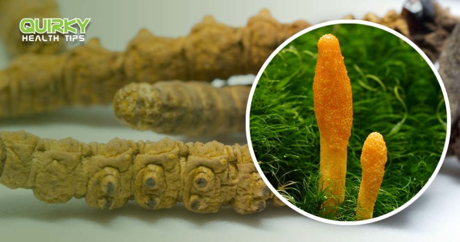 Cordyceps for Health: Creepy Crawly Natural Medicine
